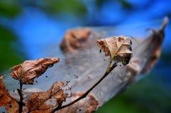 Naturwunder in den Parks Stockfotos