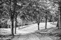Natury, środowiska i ekologii pojęcie, Footpath wśród zielonych drzew, ekologia Ścieżka w wiosny lub lata lesie, natura zdjęcie stock