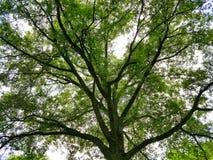 Natury światła słonecznego wiosny drzewny niebo Fotografia Royalty Free