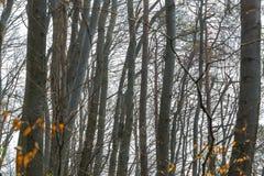 Natury światła słonecznego zieleni drewniani tła lasowej zieleni wiosna Obraz Royalty Free