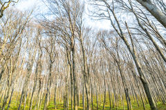 Natury światła słonecznego zieleni drewniani tła lasowej zieleni wiosna Obrazy Royalty Free