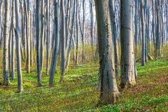 Natury światła słonecznego zieleni drewniani tła lasowej zieleni wiosna Obrazy Stock