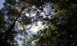 Natury światło Zdjęcia Royalty Free