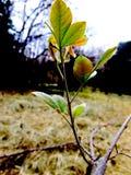 Natury życia gałęziasty drzewo opuszcza pięknego naturalne światło obraz royalty free