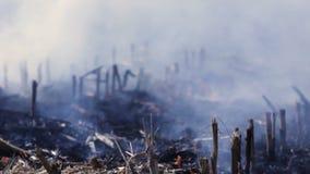 Natury awaryjny ekologiczny środowiskowy zniszczenie zbiory wideo