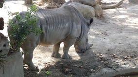 Natury barcellona zoo Libero animali Zdjęcia Stock