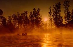 natury basenu dopłynięcie Zdjęcia Stock