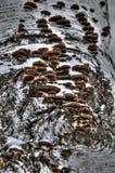 Natury brzozy tekstury skorupy drewien brzoza Obrazy Stock