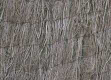 Natury ściana Obraz Stock