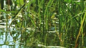 Natury czystości trawa na brzeg rzeki zdjęcie wideo