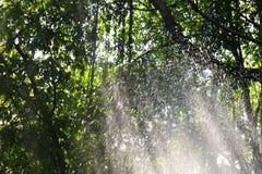 Natury drzewnego tła świeża zieleń z wodnym chełbotaniem w lesie, kiści wodzie lub kropla deszczu w naturze, Zdjęcie Stock