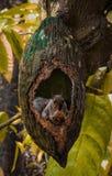 natury fotografia zdjęcia stock