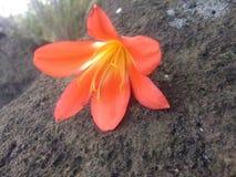 natury fotografia Zdjęcie Royalty Free