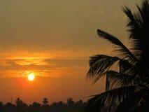 Natury fotografii buetifull słońca wzrost obraz royalty free