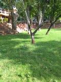 Natury fotografii greenery i trawa Zdjęcie Stock
