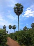 Natury Indonesia westjava Ziemska turystyka Zdjęcie Stock
