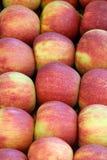 Natury jabłczany tło obraz royalty free
