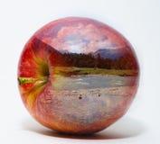 Natury jabłko Zdjęcie Royalty Free