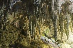 Natury jama na dżungli zdjęcia royalty free