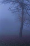 Natury jesieni drzewa Mgłowy krajobraz Zdjęcia Stock