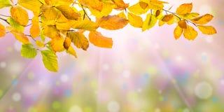 Natury jesieni tło Zdjęcie Stock