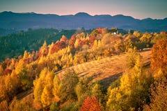 Natury jesieni transformacja zdjęcia stock