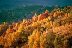 Natury jesieni transformacja fotografia stock