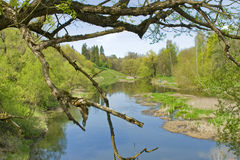 Natury lanscape z rzeką i drzewem Fotografia Stock