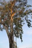 natury lasowego drzewa białego bagażnika drzewny narastający oddolny słońce zdjęcie stock