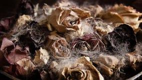 Natury mortius Fotografia Royalty Free