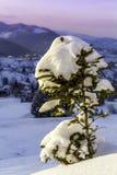 Natury odmładzanie mały zimy drzewo, zakrywający z śniegiem Zdjęcie Stock