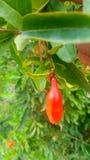 Natury owoc i ładni spojrzenie liście zdjęcia royalty free