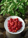Natury piękna chili ziarno Srilanka zdjęcie royalty free