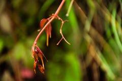Natury piękna prezent zdjęcie stock