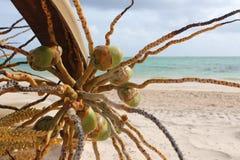 Natury plażowy drzewny morze Obrazy Stock
