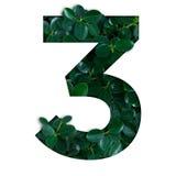 Natury pojęcia abecadło zieleń opuszcza w liczbie trzy Zdjęcia Royalty Free