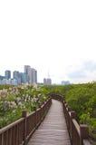 natury prezerwa Taiwan Obraz Stock