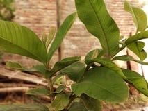 Natury rośliny krótkopęd mój telefonu Redmi notatki 5 Pro podwójną kamerą zdjęcia royalty free