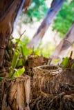 Natury ` s filiżanka Zdjęcie Royalty Free