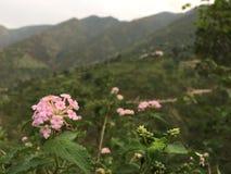 Natury ` s piękno z iphone ` s kamerą przy najlepszy widokiem Obrazy Royalty Free