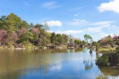 Natury Sakura krajobrazowy drzewo i niebieskie niebo odbijaliśmy w rzece Zdjęcia Stock