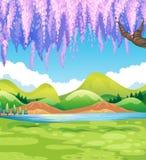 Natury scena z zieleni śródpolnym i wierzbowym drzewem Zdjęcia Royalty Free