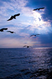 natury seagulls seascape niebo Fotografia Royalty Free