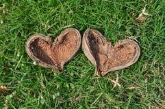 Natury serce Obrazy Stock