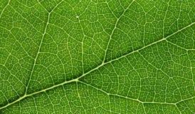 natury sieć fotografia stock