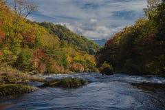 Natury siklawa w lasowym wodnym strumieniu sezon w Nikko Japan Zdjęcie Stock