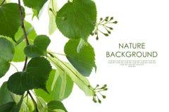 Natury tła liści rama fotografia stock