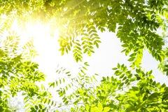 Natury tła liści rama obraz stock
