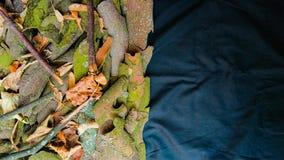 Natury tło opuszcza, gałąź i drzewna barkentyna zdjęcia royalty free