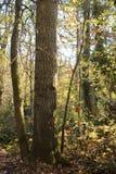 Natury tło, złota godzina w spadku lesie zdjęcia stock